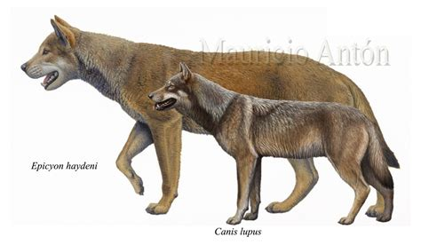 species canine блогът на valentint largest prehistoric animals vol 1 vertebrates part1