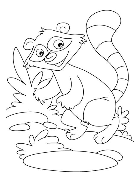 baby raccoon coloring pages baby raccoon coloring pages az coloring pages
