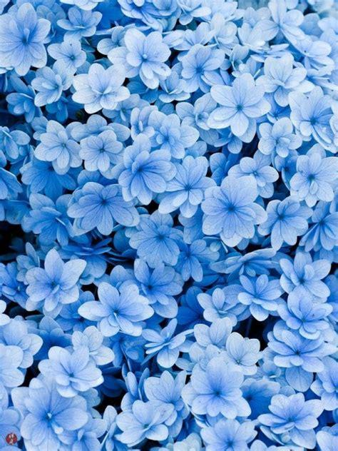 Blue Flowers by Blue Flowers On