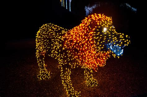 zoo lights hours zoolights at the zoo top places to see in arizona