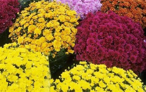 fiori da cimitero furti al cimitero fermato un anziano mentre rubava fiori