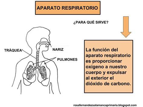 imagenes del sistema respiratorio ingles maestra de primaria aparato respiratorio y circulatorio