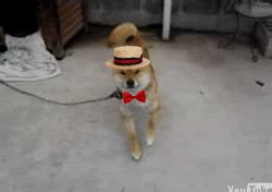 Dancing Dog Meme - this dancing dog just seems happier with a hat and bowtie