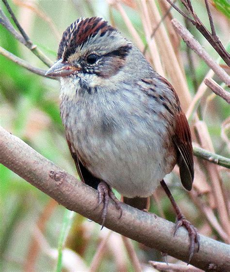 finderne wetlands birding ebird
