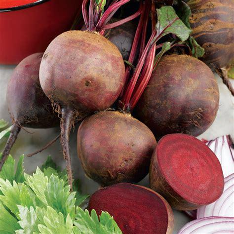 beet root vegetable beetroot seeds boltardy dobies of