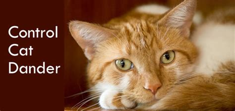 tips for people with cat allergies control cat dander