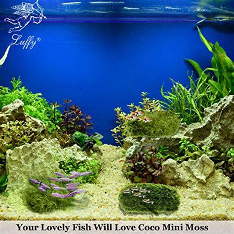 aquascape qatar luffy coco mini moss builds a beautiful natural