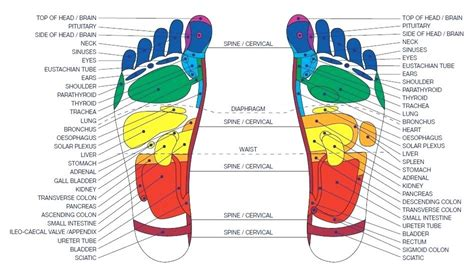acupressure diagram of pressure points reflexology chart pressure points foot covernostra info