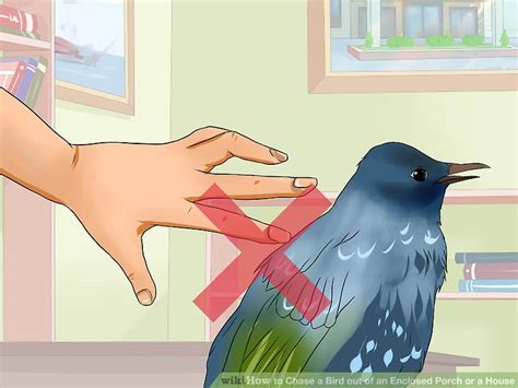 Bird Flying Into House by How To A Bird Out Of An Enclosed Porch Or A House