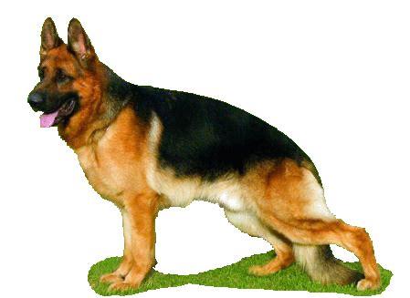 fotos que se mueven de risa 10 im 225 genes que se mueven de perros im 225 genes que se mueven