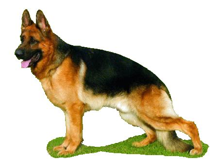 imagenes que se mueven de risa 10 im 225 genes que se mueven de perros im 225 genes que se mueven