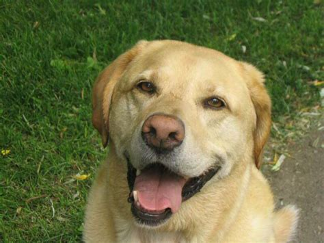 dogs with yellow yellow images search