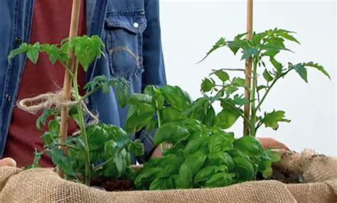 orto in cassetta orto in cassetta fai da te come organizzare un orto in