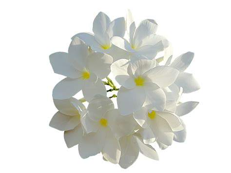 White Flowers by Free Illustration White Flowers Bouquet Of Flowers