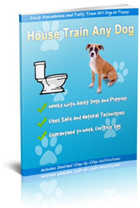 house train any dog potty training your dog tips strategies and techniques