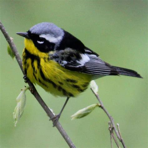 western new york land conservancy annual meeting birds