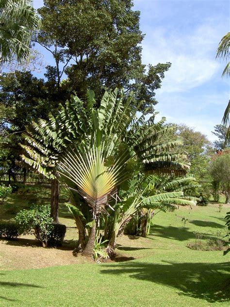 St Vincent Botanical Gardens St Vincent Botanical Gardens