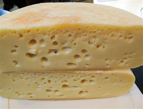 swiss cheese recipe how to make cheese cheesemaking