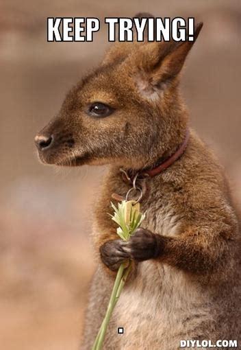 Kangaroo Meme - related keywords suggestions for kangaroo meme