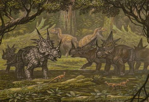styracosaurus albertensis rubeosaurus ovatus