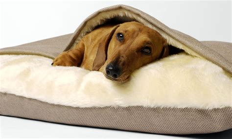 dog snuggle bed snuggle beds for dogs uk perplexcitysentinelcom dog beds