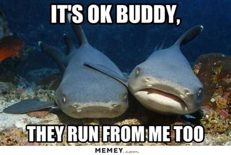 Funny Shark Meme - 25 best ideas about funny sharks on pinterest shark