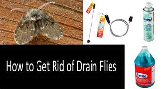 how to get rid of bathroom flies how to get rid of bathroom flies thedancingparent com