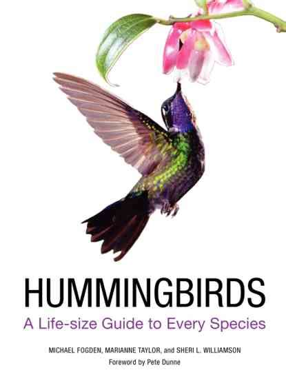 real hummingbird feathers for sale flying jewels where hummingbird colors come from nature and environment earth news