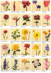 flower names weneedfun