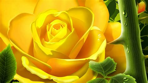 themes rose flower romantic flowers yellow rose flower