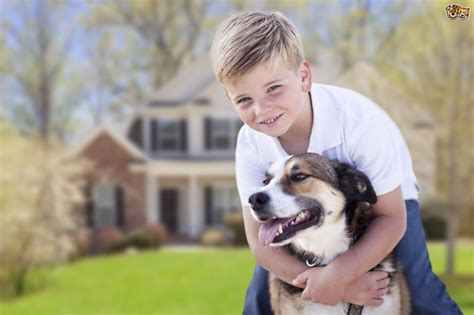 puppies and toddlers does your child behave appropriately towards your pets4homes