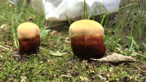 Pilze Im Garten Bilder