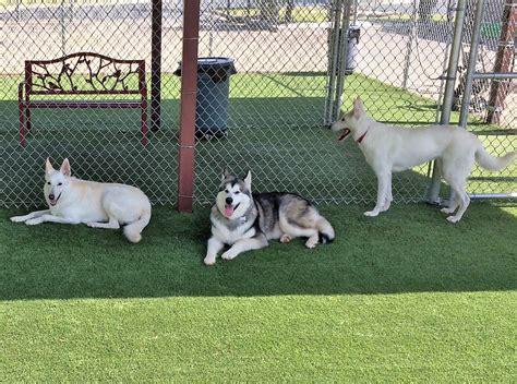 artificial turf for dogs artificial grass in broken arrow ok from nexgen lawns