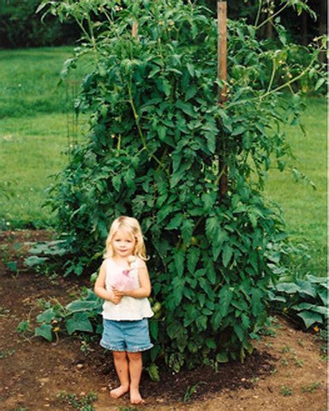 your best vegetable garden tips martha stewart