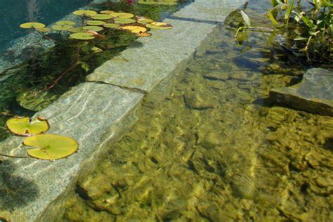 algen im gartenteich entstehung und vermeidung algen