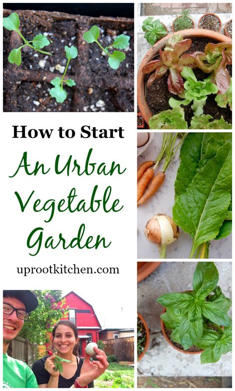 how to start a small vegetable garden in your backyard how to start an urban vegetable garden