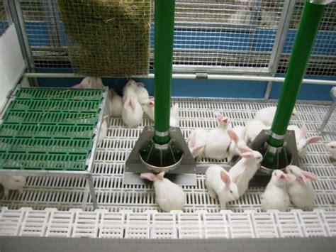 gabbie allevamento conigli box per conigli all ingrasso gestione e alimentazione