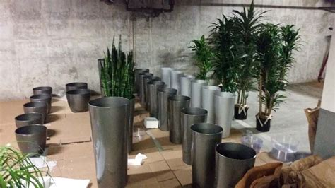 Interior Plantscapes Installation Maintenance And Management by Interior Plants For Building Lobby Plantopia Interior