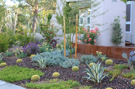 16 best images about drought tolerant front yard on pinterest kangaroo paw this weekend and
