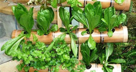 giardini verticali fai da te giardino verticale fai da te stili di giardini