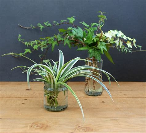 love plants but no sunlight these 15 plants can be your best buddy best plants for no sunlight best free home design