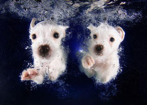 designboom underwater seth casteel snaps underwater puppies making a splash