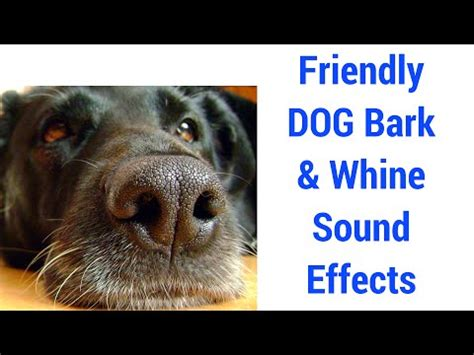 puppy barking sound best images collections hd for gadget windows mac android