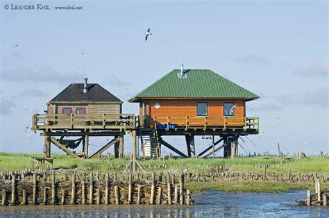 küsten bäder seeschwalbeninsel norderoog birding and bird photography