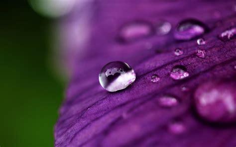 flower petals water hd wallpaper 1814076 up flower flower petals rosa water drop purple