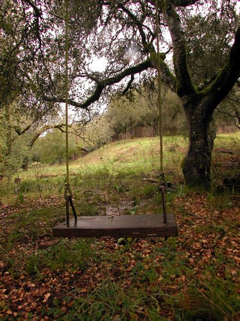 best tree swing 17 best images about tree swings and old barns on