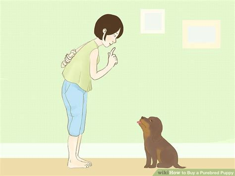 buy a puppy how to buy a purebred puppy 13 steps with pictures wikihow