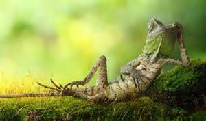Lounge Lizards Chameleon Forest Poses Like Human Nature News