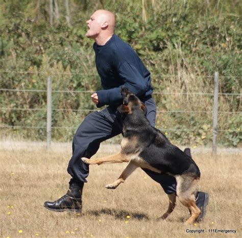 cop dogs dogs attacking breeds picture