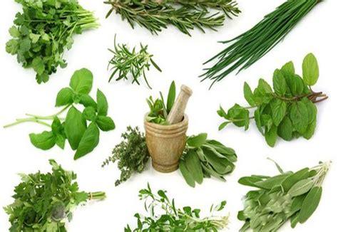 produk herbal indonesia herbal indonesia